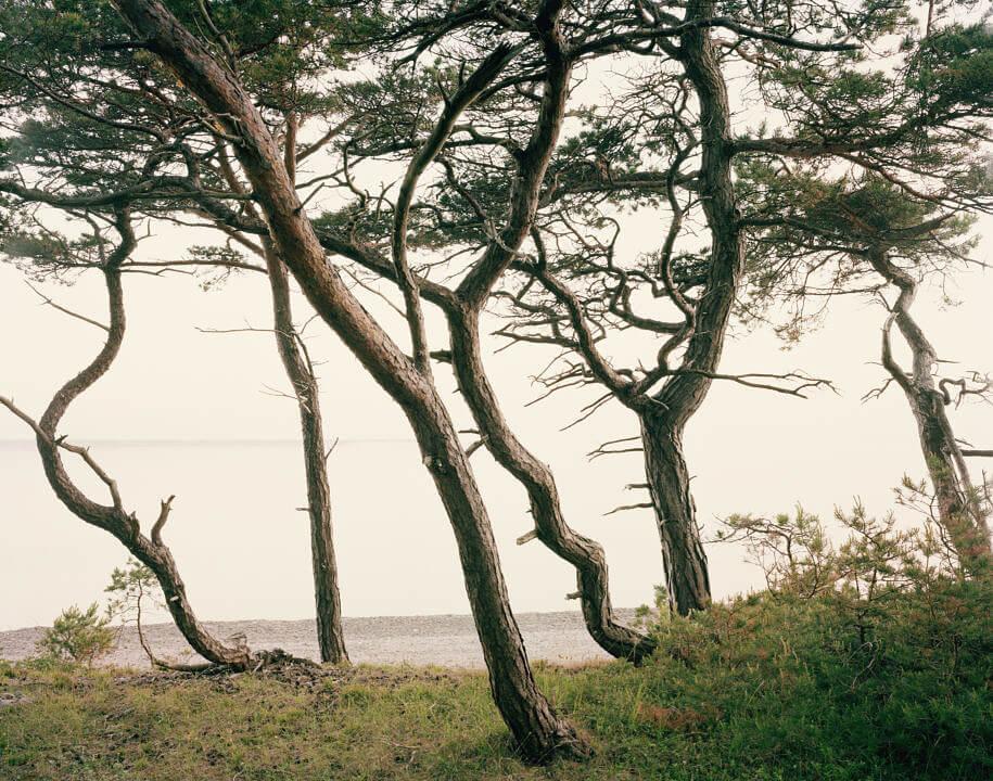 Gotland2 006
