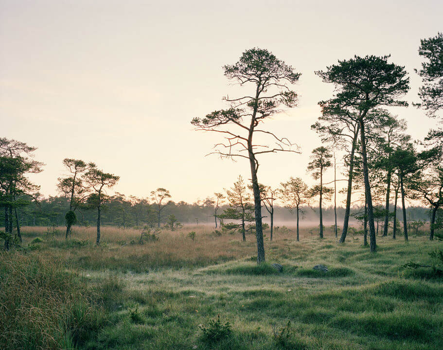Gotland2 005