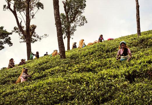 Conde Nast Traveller US, Sri Lanka