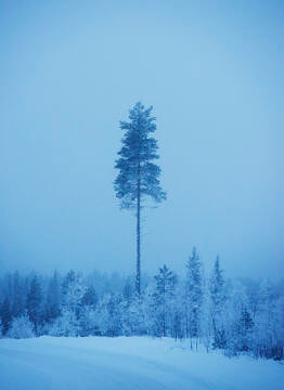 travel & leisure Lappland